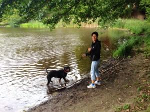 rotweiler_hund