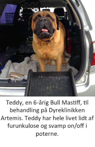 Teddyfoto1