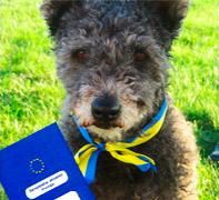 Det nuværende hundepas ersattes med et nyt d. 28. december 2014.