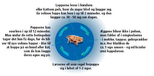 Loppe_grafik