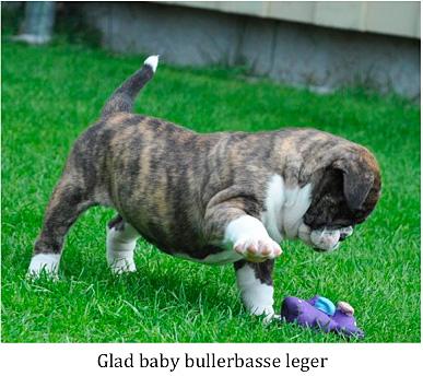 Glad_baby_bullerbasse
