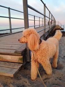 Hunden skal minimum være 15 uger, før den kan komme med til udlandet.